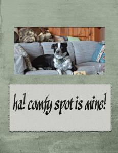 The Comfy Spot