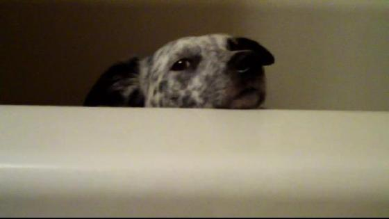 Benny Looking out of Tub