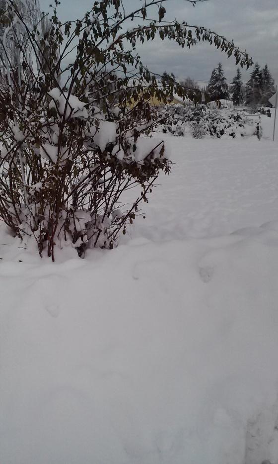 Snowy Wenatchee