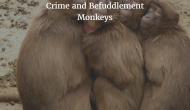 Crime and BefuddlementMonkeys