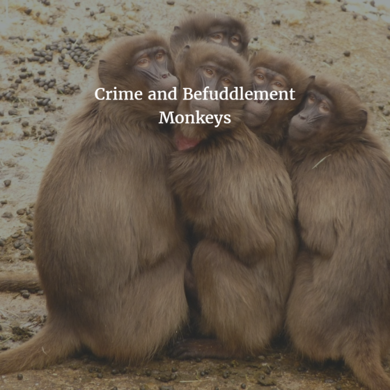 Crime and Befuddlement Monkeys