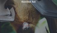 Bundled Bat