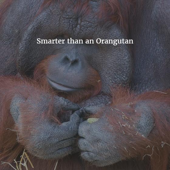 Smarter than an Orangutan