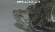A Tortoise Treatise