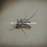 All You Can Eat Bug Buffet