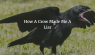 How A Crow Made Me A Liar