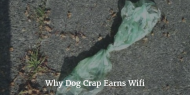 Why Dog Crap Earns Wifi
