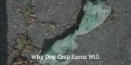 Why Dog Crap EarnsWifi