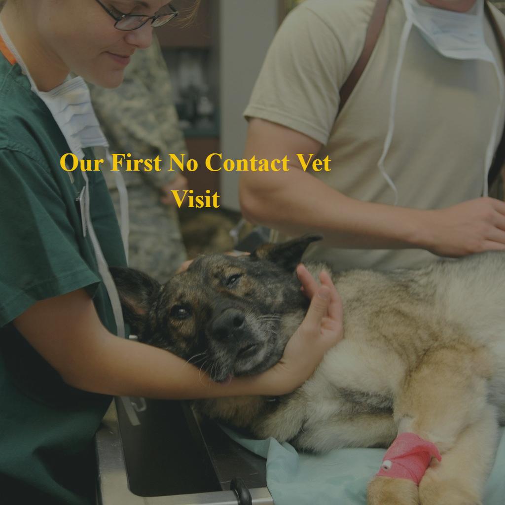 No Contact Vet Visit